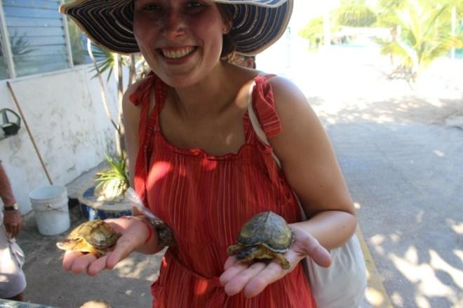 Tortuganja żółwie