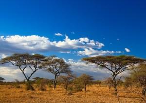 afryka-kenia-krajobraz-sawanny-z-drzewami-na-tle-blekitnego-nieba-z-chmurami
