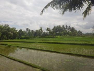 rizieres-ubud