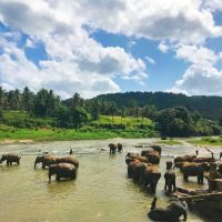 Post terror attacks, Sri Lanka takes steps to revive tourism