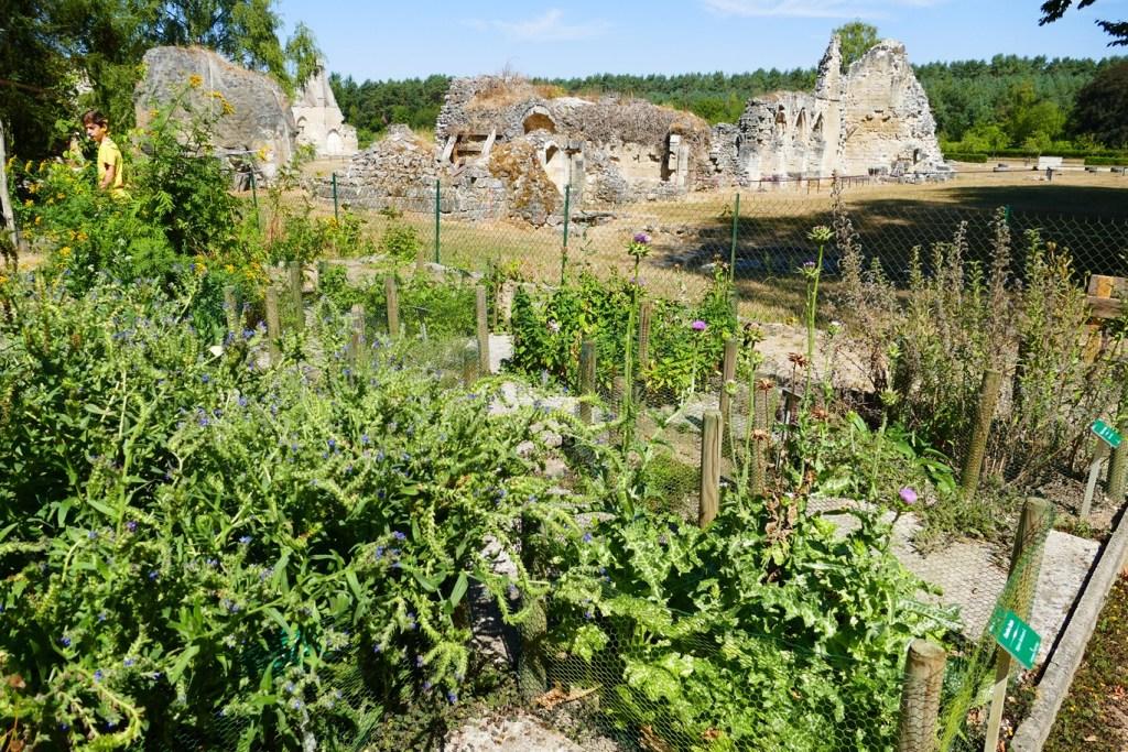 Abbaye de Vauclair (Aisne) - jardin de plantes médicinales