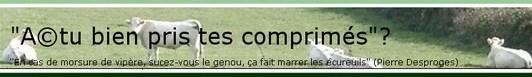 Cliquez pour découvrir le blog Le Chat