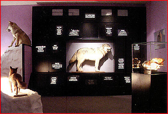 musee du loup bretagne