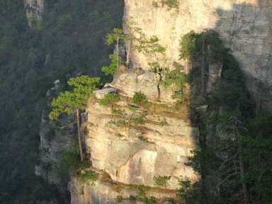 Zhangjiajie, beauté de karsts et de verdures 11