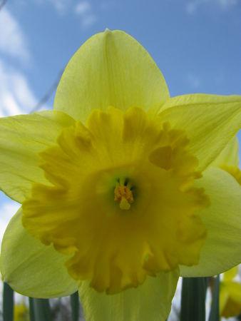 309ae 51514277 p Les fleurs printanières du Gers