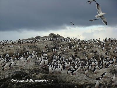 Ushuaia : Navigation par le canal de Beagle 2