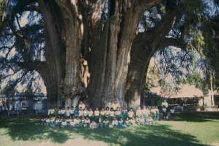 arbre entretien francis hallé