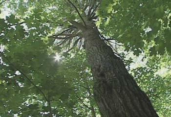 medium_arbre.jpg