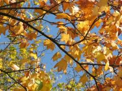 automne,étymologie