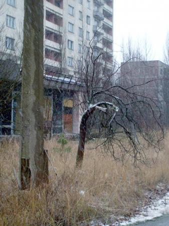 Tchernobyl pripyat végétaux radioactivité