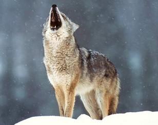 Le loup dans la mythologie roumaine 1