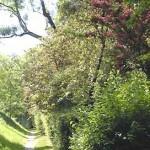 arbres feuillages