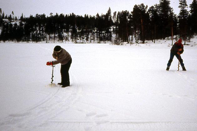 aventure dans la taiga en laponie finlandaise