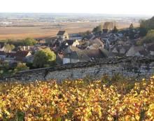 Volnay bourgogne