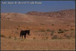 Ane désert de Wadi Rum
