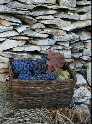 Agrotourisme Kalpic - Raisins Croatie hors des sentiers battus