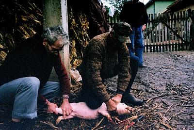 Serbie tuer le cochon