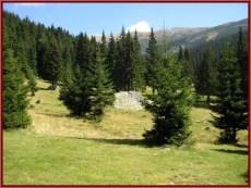Parc national retezat sapins