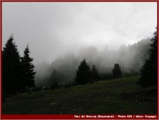 Retezat brouillard parc national roumanie