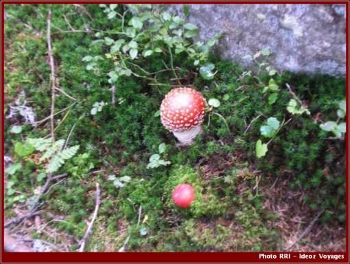 Retezat champignons parc national roumanie