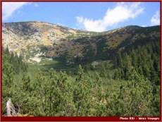 Retezat parc national roumanie sapins