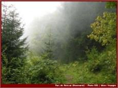 Retezat vegetation brouillard