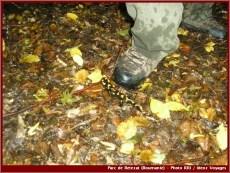 retezat faune a l'automne parc national roumanie