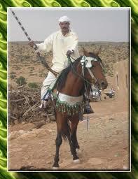 mokkadem chevalier maroc