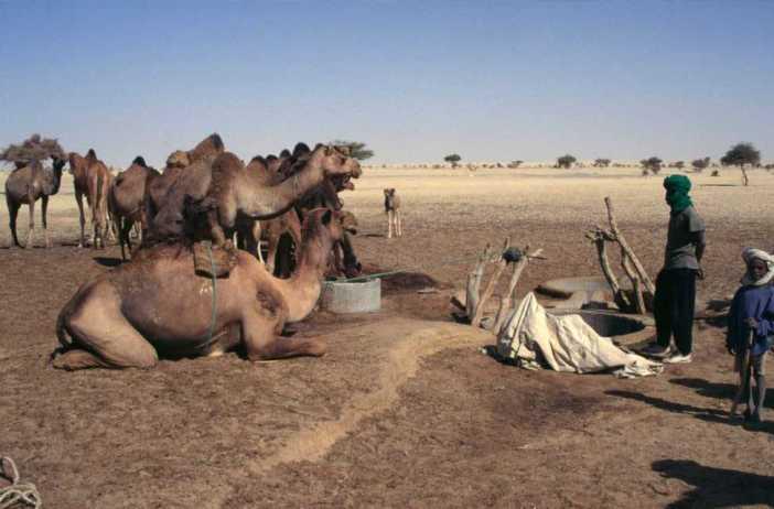 Caravane de chameaux s'abreuvant au puits de Burkina