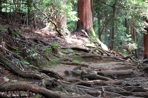 kurama arbres kibune