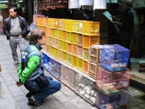 hong kong marche oiseaux
