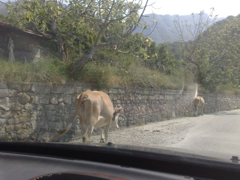 vache route bar virpazar
