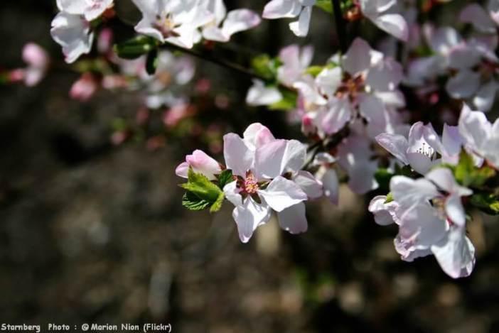 Arbres au printemps sur les bords du lac Starnberg