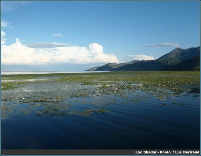 ecosysteme Lac Skadar au Montenegro