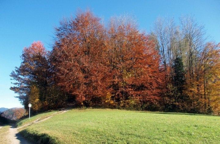 kochelsee lac kochel arbre en automne