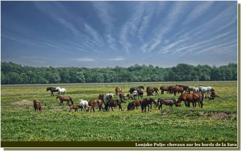 Lonjsko polje chevaux