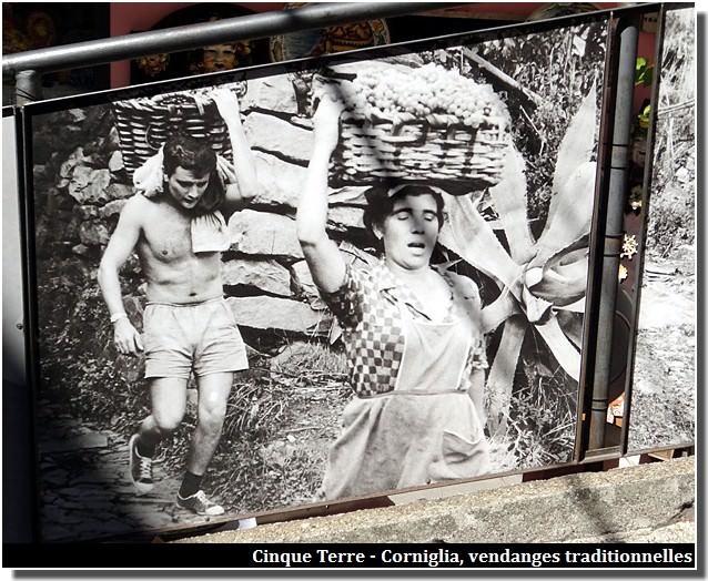 manarola vendanges traditionnelles cinque terre