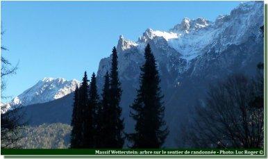 Foret du massif Wetterstein pres de Lautersee