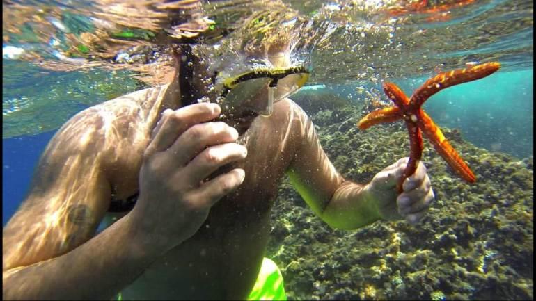 snorkeling dans les iles Kornati découverte des étoiles de mer