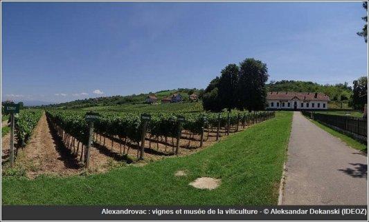 Alexandrovac Serbie musée de la viticulture et vinothèque