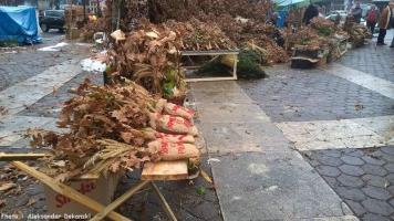 Belgrade Kalenic pijaca vente de branches de chenes pour Badnji dan