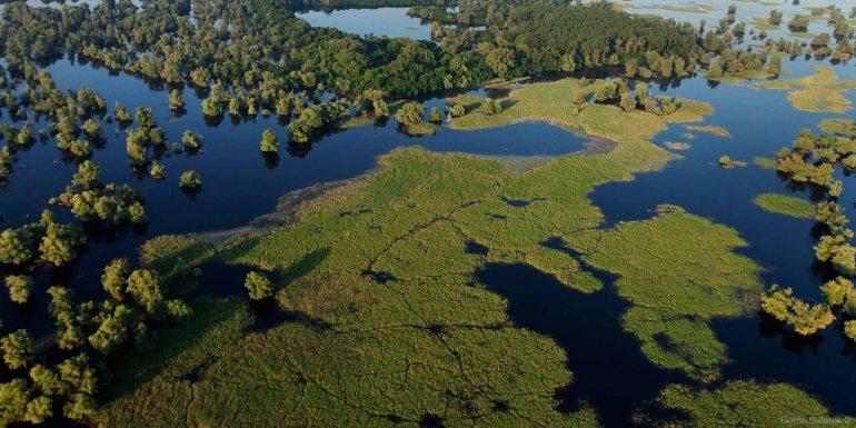 marais du parc naturel croate de kopacki rit goran safarek