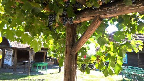 Agrotourisme Etno vino Janko Kezele Vignes