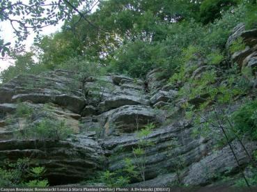 Canyon Rosomacki Lonci