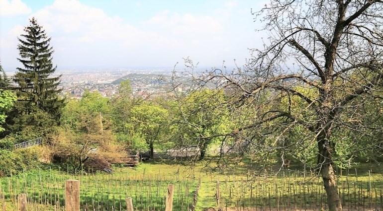 Colline de Buda vue depuis le jardin jokai