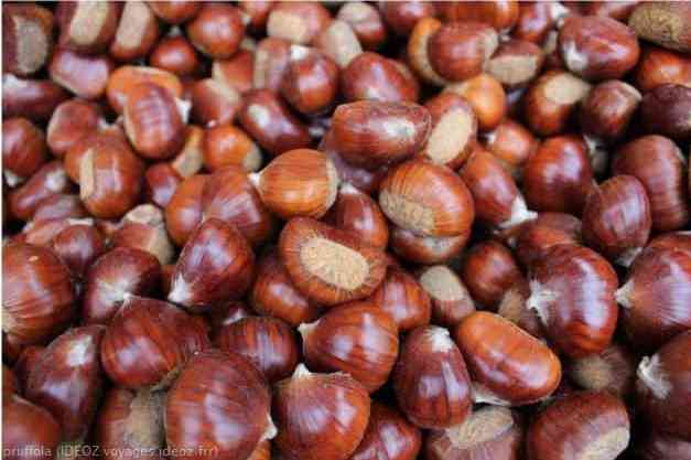 marrons de marradi sur la route du Mugello