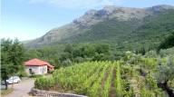 vignes du monastère Tvrdos près de Trebinje en republique serbe de Bosnie