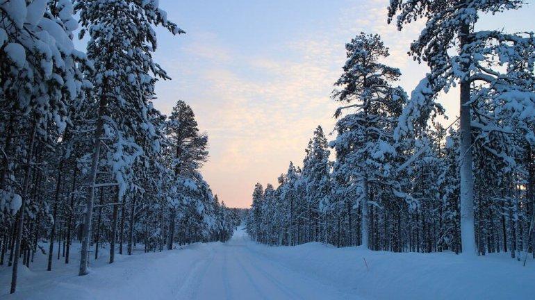 Forêt enneigée en Laponie finlandaise