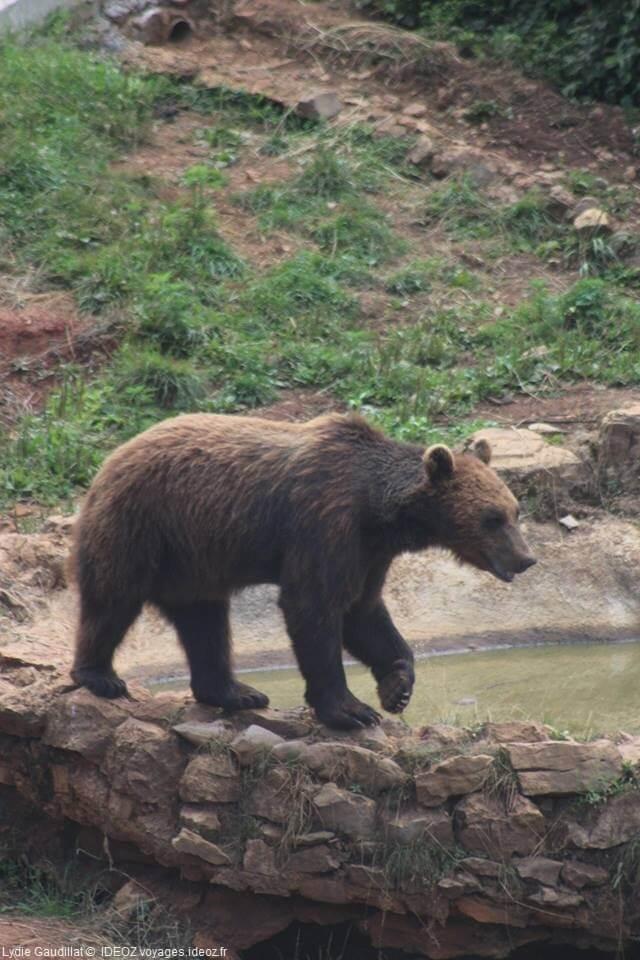 ours dans le refuge de Kuterevo en Croatie