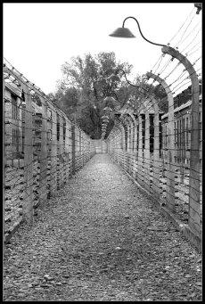 Camp d'Auschwitz fers barbelés